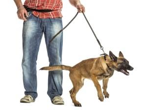 pulling-dog-117858079